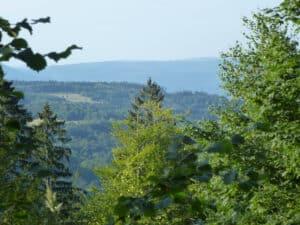 Vue à travers les bois où se trouvent les Allemands